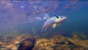 Ловля ручьевой форели на лесной реке спиннингом на блесны колебалки - Мужская компания