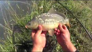 Рыбалка на фидер — Дневник рыболова