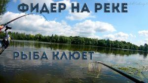 Летний фидер на реке Москва - Рыбалка с Пашком