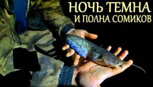 "Ночная рыбалка на ""огромного"" сома"