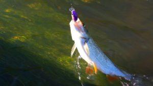 Рыбалка на малых реках летом - Мужская компания