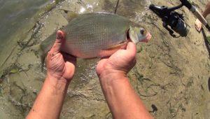 Рыбалка с ночёвкой на реке — Дневник рыболова