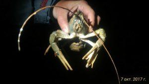 Ловля раков на пирамидки и сало осенью с ночёвкой — Дневник рыболова