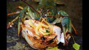 Ловля раков на шашлык, WD и сникерс — Дневник рыболова