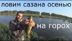 Ловля сазана и карася на горох осенью — Рыбалка моими глазами