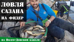 Осенняя ловля сазана на фидер на Волго-Донском канале — Рыболовный дневник