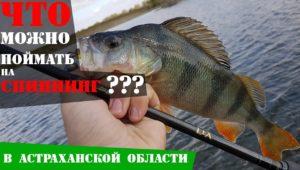 Рыбалка в Астрахани на спиннинг — Рыболовный дневник