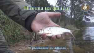 Плотва на фидер — С рыбалкой по жизни