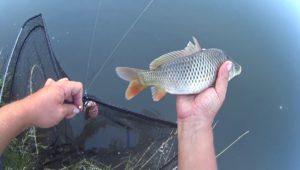 Летняя подборка неизданных рыбалок за 2017 год — Дневник рыболова