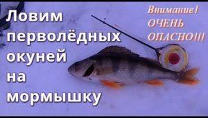 Ловим окуней на мормышку по первому льду - Болен рыбалкой