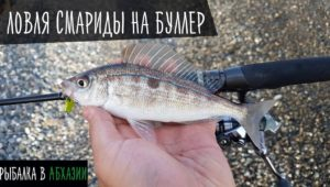 Ловля смариды на буллер — Рыболовный дневник