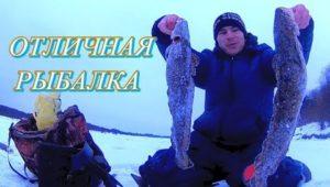 Налим радует - Болен рыбалкой