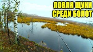 Потайная речка среди торфяных болот. Ноябрьская щука