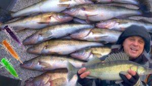 Трудовая ловля судака зимой на спиннинг — Клуб рыбаков