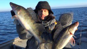 Жор трофейного судака - Клуб рыбаков
