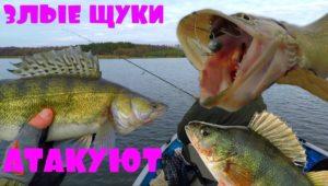 Зимний спиннинг. Огромные щуки, окуни и судаки - Клуб рыбаков