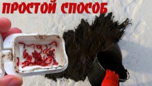Как добыть мотыля с помощью ведра и лопаты