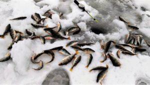 Волшебная лунка — Дневник рыболова