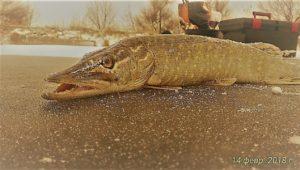 Зачётная зимняя рыбалка — Дневник рыболова