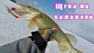Ловля щуки на балансиры — Клуб рыбаков
