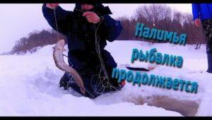 Налимья рыбалка продолжается - Болен рыбалкой