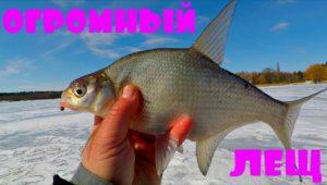 Огромный лещ - Клуб рыбаков
