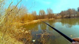 Ротан в городском пруду