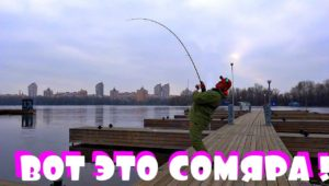 Рыбалка с фидером в центре Киева - Клуб рыбаков