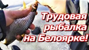 Трудовая рыбалка на Белоярке — ПашАсУралмашА