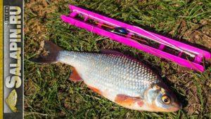Открытие сезона поплавочной рыбалки - Салапин