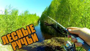 Рыбалка на лесных ручьях