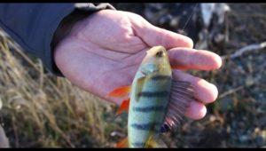 Рыбалка на ультралайт с берега - Мужская компания