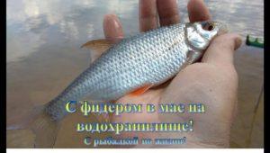 С фидером  на Истринском водохранилище — С рыбалкой по жизни!