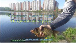 С фидером в мае на пруду - С рыбалкой по жизни!