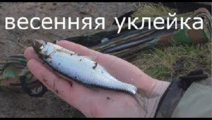 Весенняя уклейка — Рыбалка моими глазами