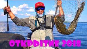 Где найти судака и сома на Днепре - Дневник рыболова