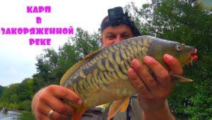 Ловля карпа удочкой с боковым кивком - Клуб рыбаков