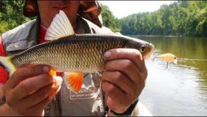 Сплав по реке и ловля голавля на спиннинг воблерами - Мужская компания