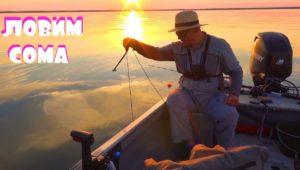 Как Михалыч на сома ходил — Клуб рыбаков