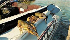 Ловля раков в центре города - Дневник рыболова