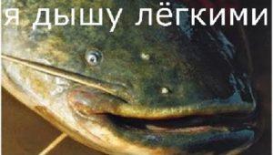 Ловля сомиков и карпа — Рыбалка моими глазами