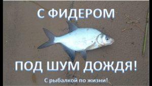 С фидером под шум дождя — С рыбалкой по жизни!