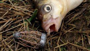 Самодельная насадка для мирной рыбы с семечками