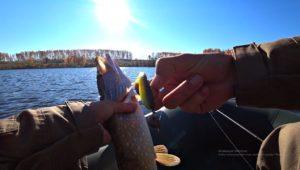 Рыбалка на спиннинг на пруду - Рыбалка 68