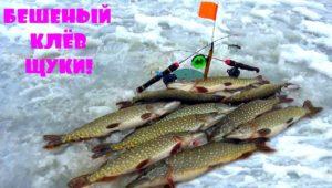Бешеный клев щуки на жерлицы и балансиры - Клуб рыбаков