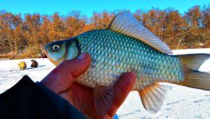Как поймать карася зимой - Клуб рыбаков