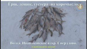 Ёрш, лещик и густера на коромысло — С рыбалкой по жизни!