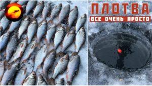 Ловля плотвы зимой — В поисках ерша