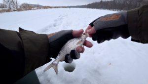 Плотва на манку и мормышку - Рыбалка 68