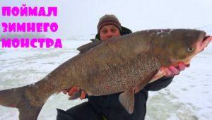 Поймал зимнего монстра-толстолобика - Клуб рыбаков